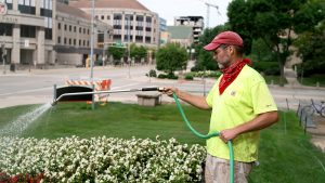 Stephen Skinner at work watering the wisconsin W in front of campus intersection