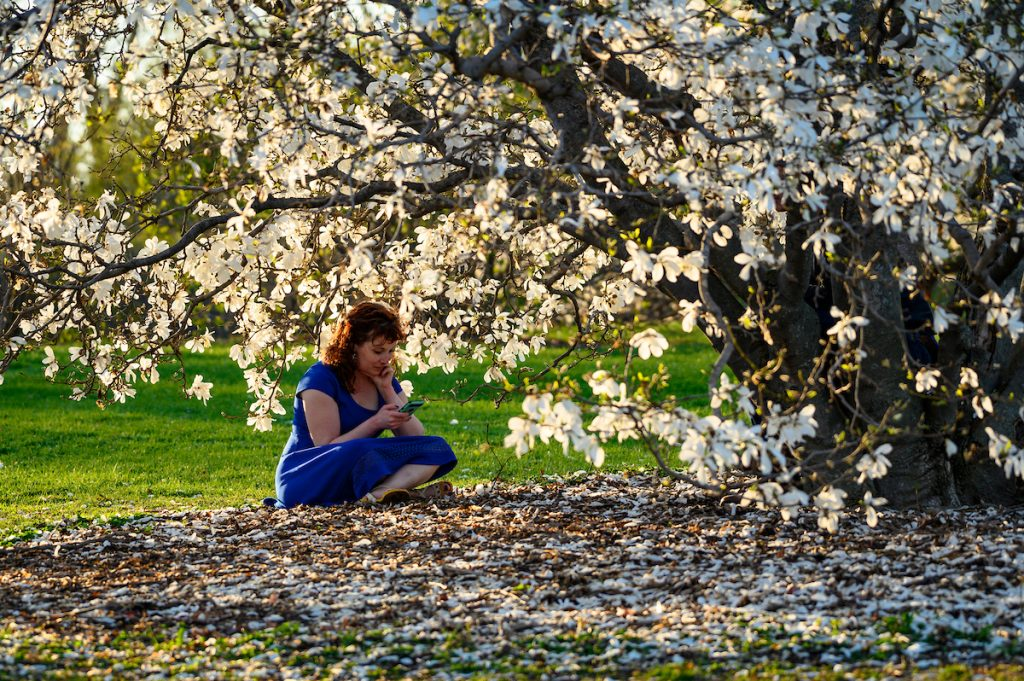 photo: person sitting under a tree with flowers