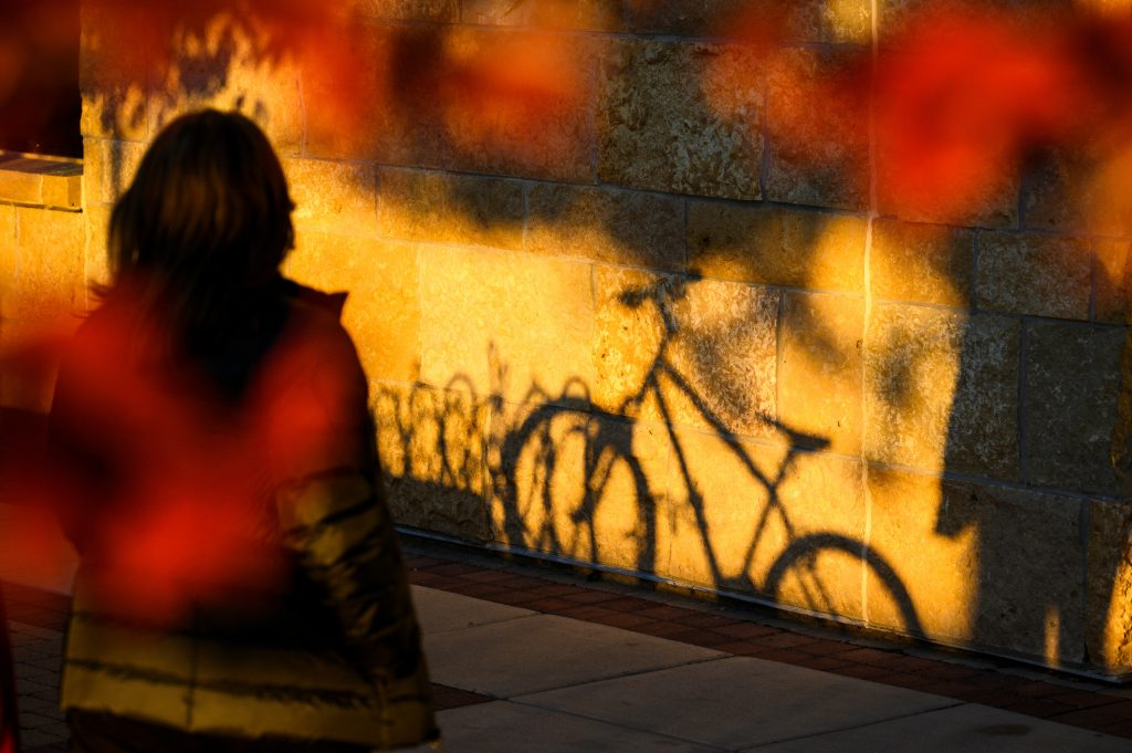 Photo: shadow of a bicycle parked under flowered tree with shadows of people and bike against stone wall
