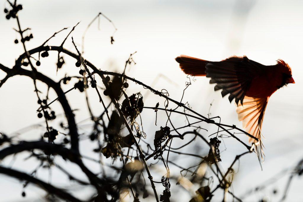 bird flying through reeds against lake background